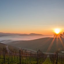 Ample sunshine and fertile soil make the Baden wine region an ideal place for wine grapes to grow