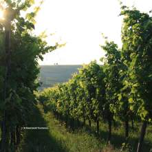 The wine season in the Baden region extends from the beginning of March until the end of October.