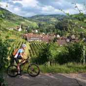 Cross-country mountain biker rides past the vineyards of the village of Sasbachwalden